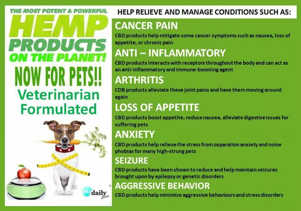 CBD OIl for Dogs with Anxiety Issues -